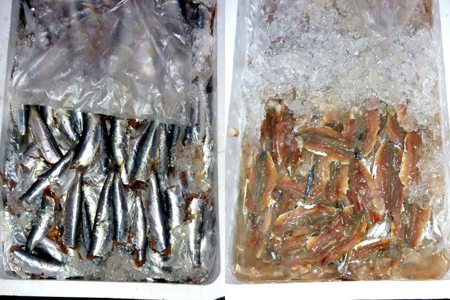 Pescados de temporada de Lonja