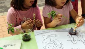 taller infantil, crea tu planta comestible, intur colectividades